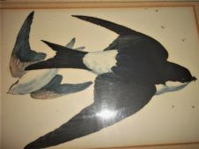 ANTIQUE FRAMED GLAZED ORIGINAL WATERCOLOUR PAINTING SWALLOWS IN FLIGHT #2